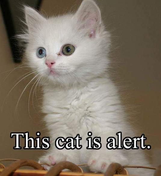 alertcat2